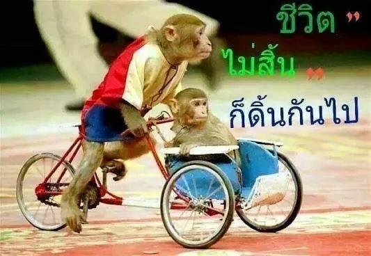 Monkeytour.jpg
