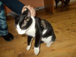 Katze-schmuggelt-Mobiltelefon-in-Gefaengnis_pdaArticleWide.jpg